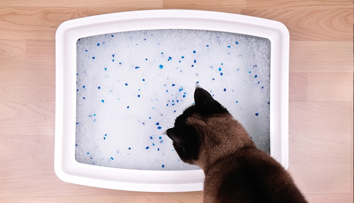 Caninsulin.com orange cat signs of diabetes