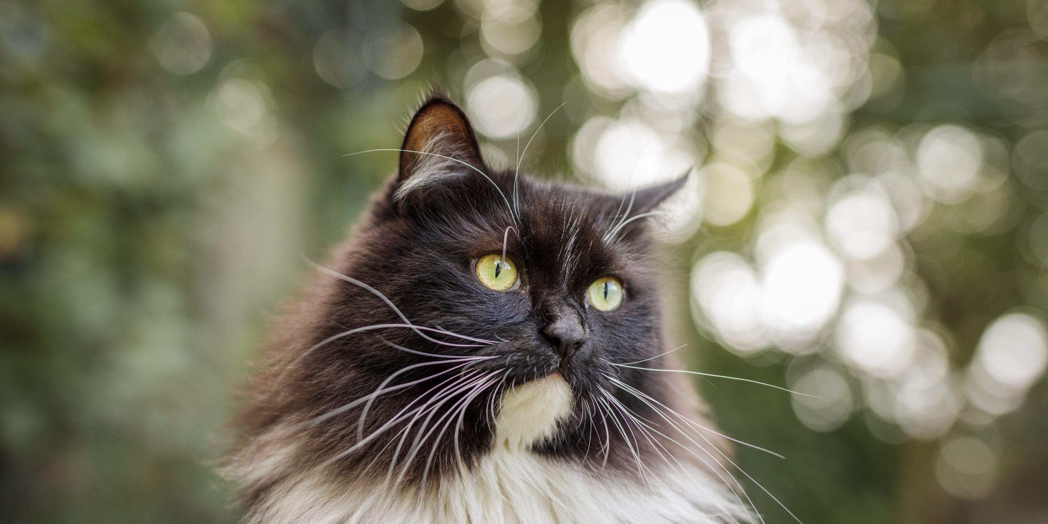 Caninsulin.com cat outside