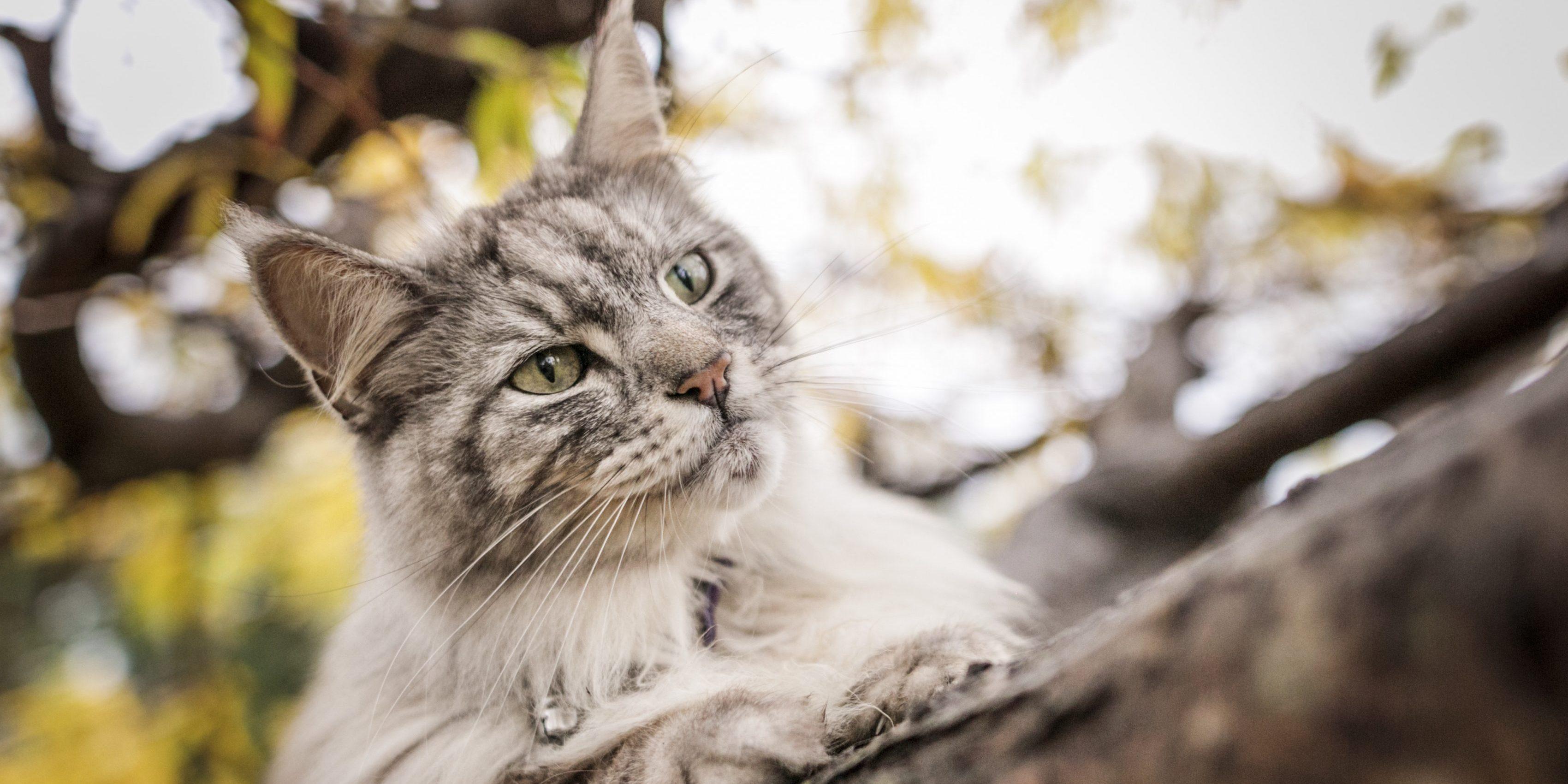 Caninsulin.com cat outside on a tree limb