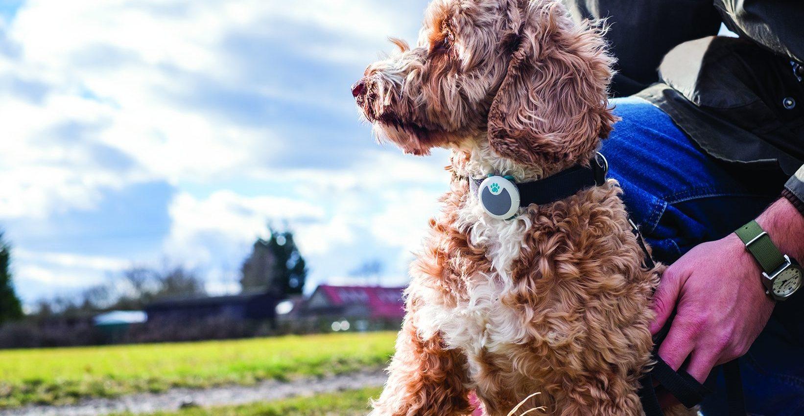 Caninsulin.com dog sure petcare animo collar