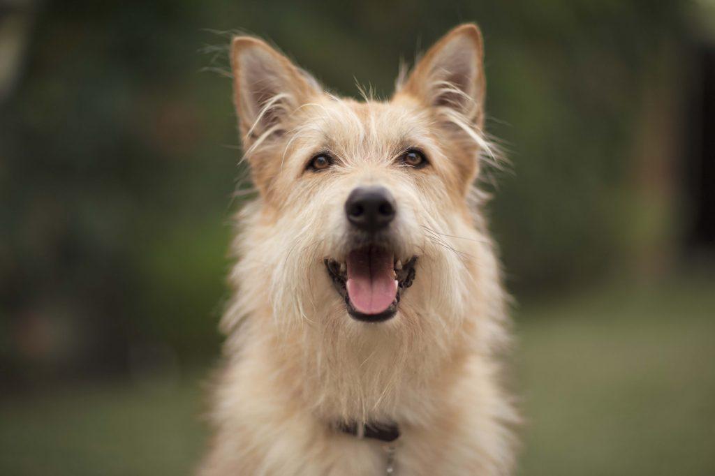 Caninsulin.com smiling dog outside