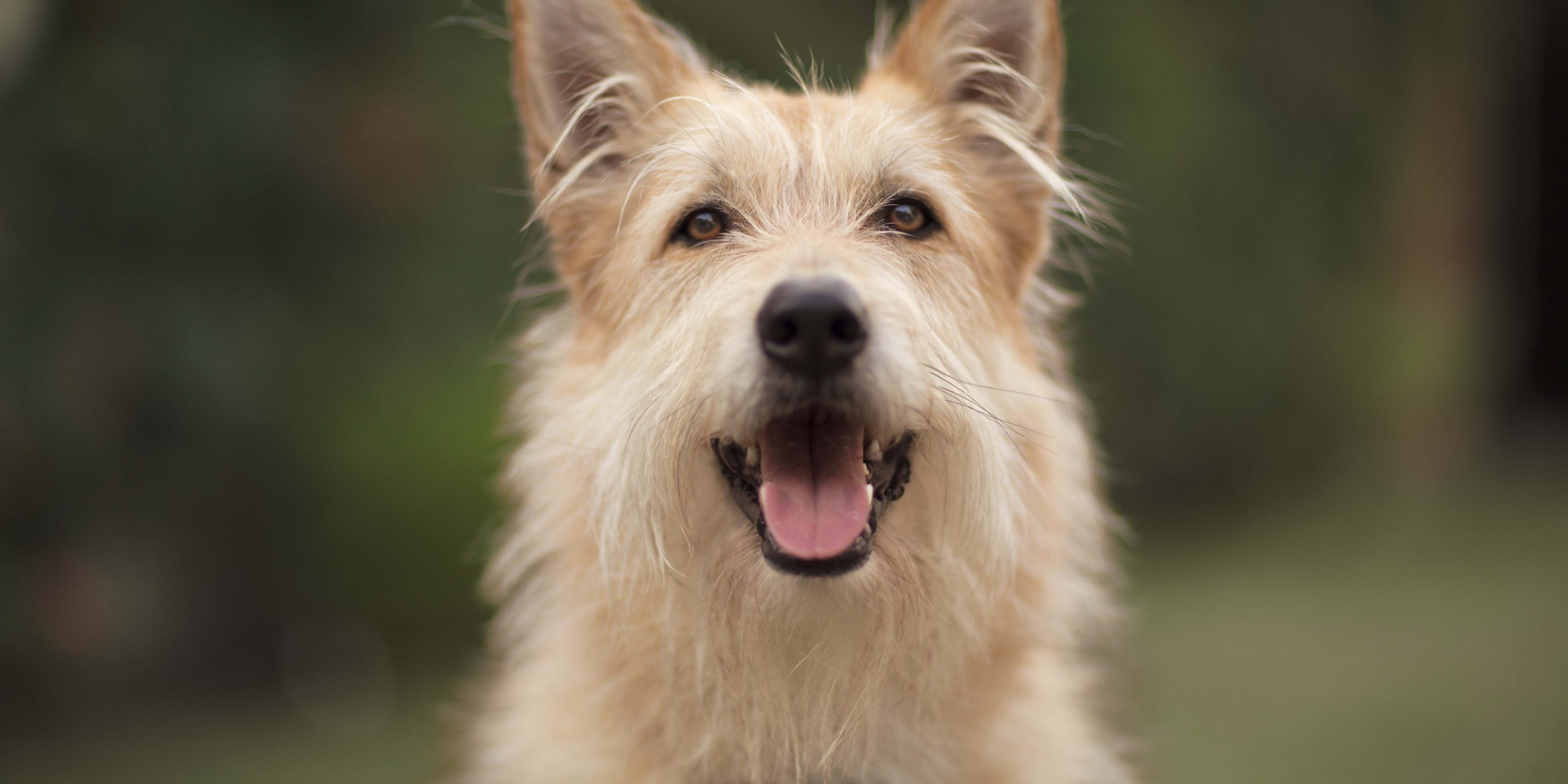 Caninsulin.com dog smiling