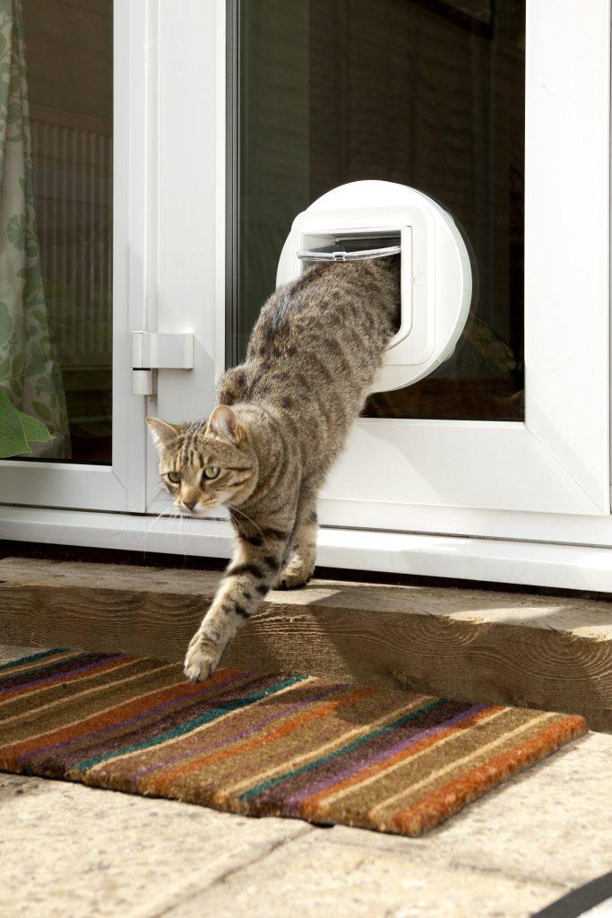 Caninsulin.com cat using SureFlap product
