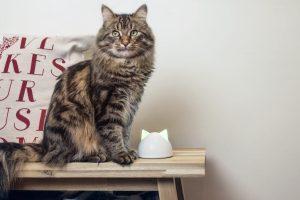 Caninsulin.com cat on a bench inside