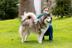Caninsulin.com dog with pet owner