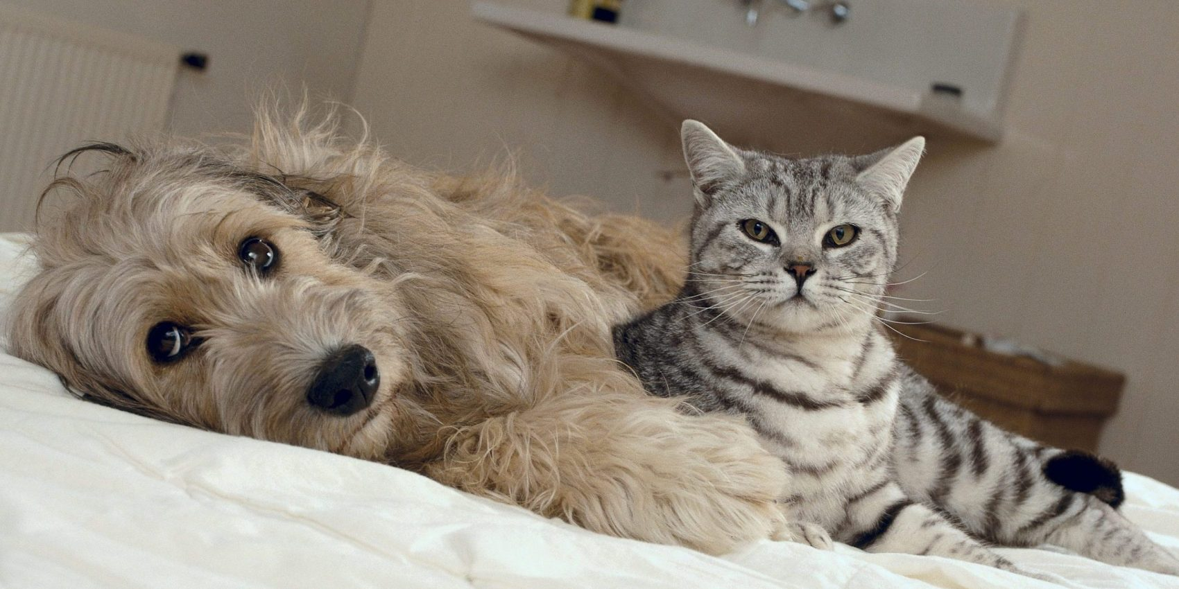 Caninsulin.com dog and cat on bed