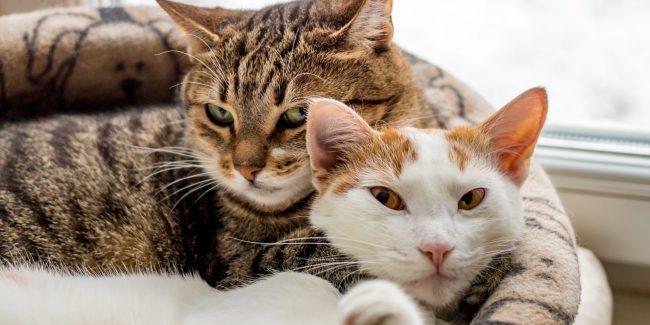 Caninsulin.com Two Cats