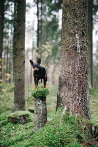 Caninsulin.com small dog
