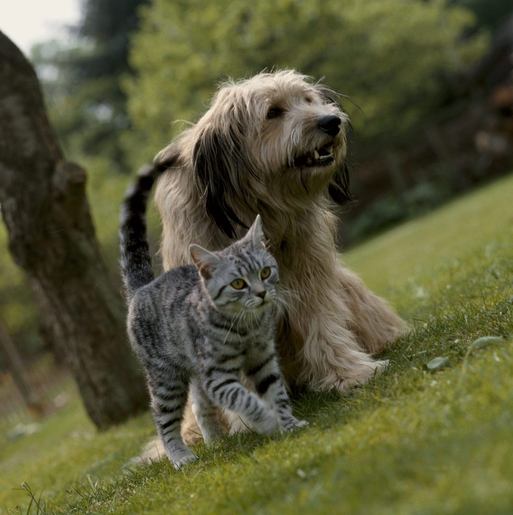 Caninsulin.com dog and cat walking