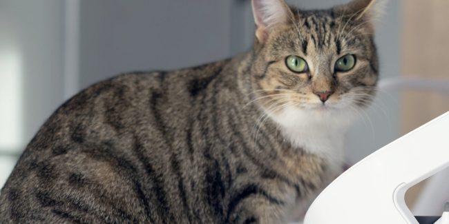 Caninsulin.com striped cat at bowl feeder